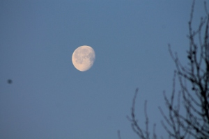 The post-full moon looking lovely in the Friday morning.
