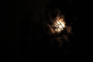 The April full moon peeking through the pines trees.