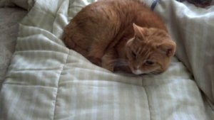 Mu baby  Pooka, in April 2013, taking a nice nap on the futon in my office. I miss her SO MUCH!!!