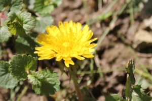 Little dandelion, let your heart keep time. All the clouds are gone, all your tomorrow shine!~Audio Slave