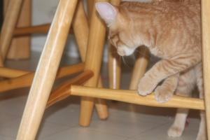 Della practicing her dexterity
