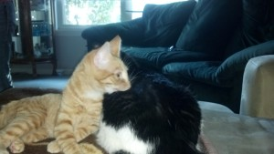 Della and Tuxx are becoming best friends fast!
