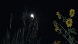The moon shining through the grass on my beach this weekend made me feel like I might be at the ocean, instead of in Indiana.