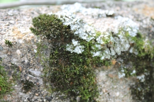A very cool shot of moss on the old US 40 bridge out west in Putnam county Indiana.