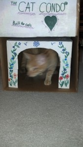Della has been having a party in her new cat condo everyday!
