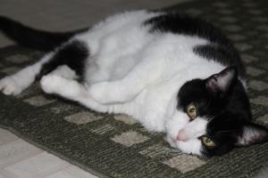 Tux rolling around in catnip.