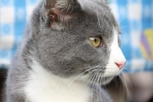 Jack Cat!