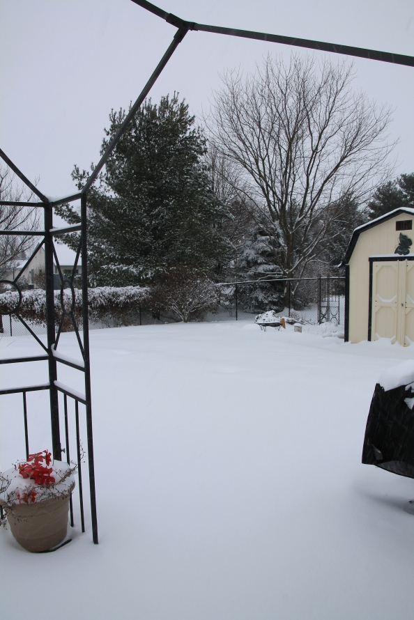 This is looking out the back door. A wonderland of white.