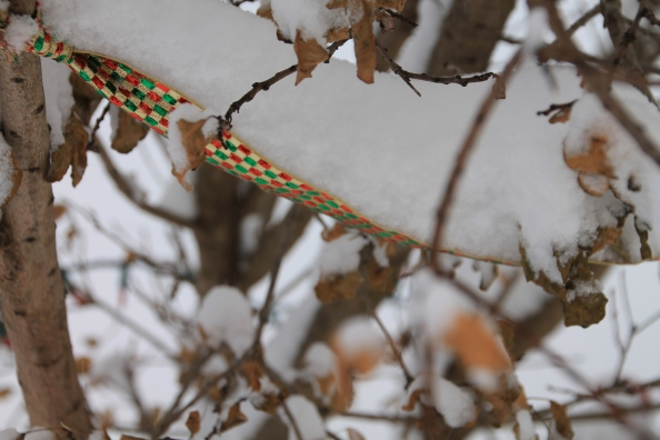 This ribbon is full of snow.