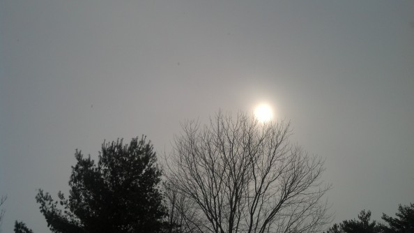 Snow Shine at my house today