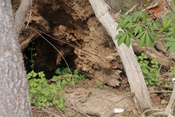 Looks like adventure could be waiting down that hole in the bottom of a fallen tree.