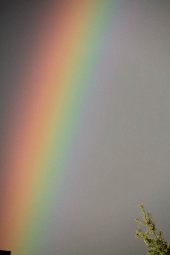 A close up shot of the rainbow from earlier this week.