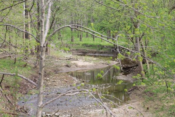 Creek in the Hunter's Creek. Runs through Hunter's Acres Wood