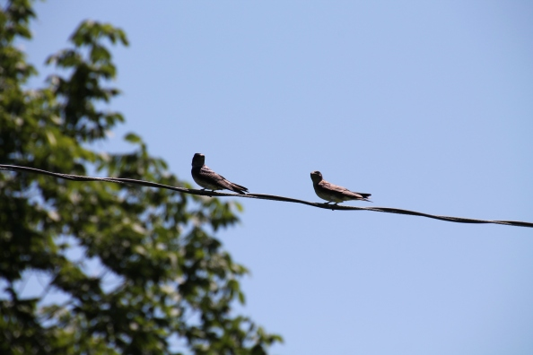 Dad's martins talking to me.