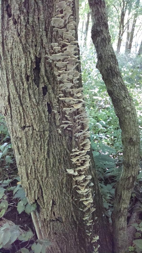 Neat looking fungus.