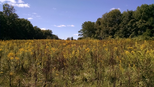 This is the meadow at Arn's Acres. It is as breathtakingly beautiful as Indiana can possibly be.